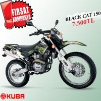 Kuba - Black Cat